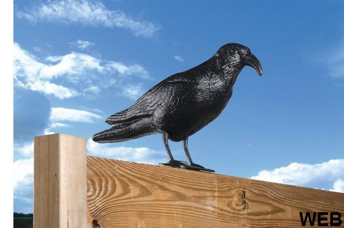 Lifetime Garden Bird Deterrent Crow ED9044 Lifetime garden